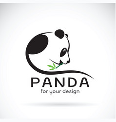 Panda design on a white background wild animals vector