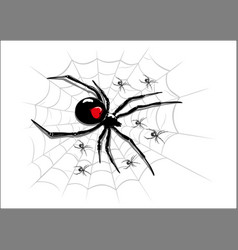 spider on codweb vector image