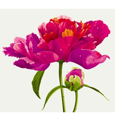 luxurious flowers vector image