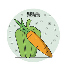 colorful poster of fresh vegetables with green vector image
