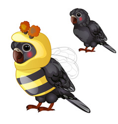 Cute black parrot in bee costume isolated on a vector