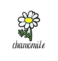 Flower chamomile vector