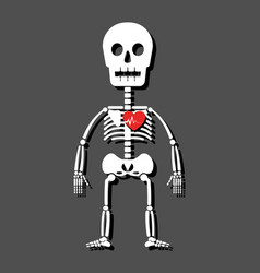human skeleton and heart cartoon style vector image