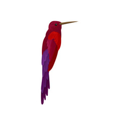 Hummingbird colibri with bright colorful plumage vector