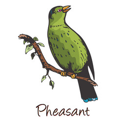 Pheasant color vector