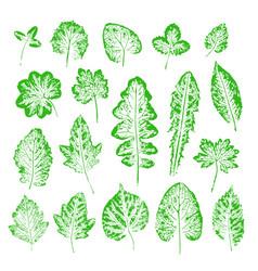 Set leaf imprints collection green leaves vector