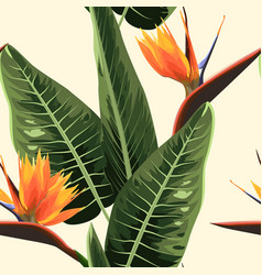 strelitzia bird of paradise exotic tropical bright vector image
