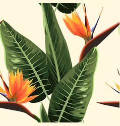Strelitzia bird of paradise exotic tropical bright vector