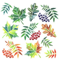 Watercolor leaves vector image vector image