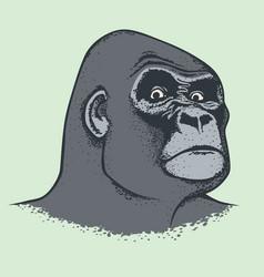 Monkey concept vector