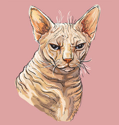 Hand drawing colorful cat 3 vector