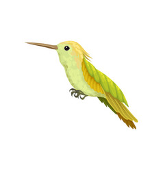 Hummingbird colibri with bright plumage vector
