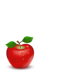 apple on white background vector image