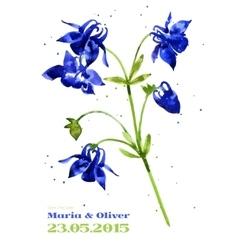 background with aquilegia nasturtium vector image