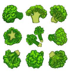 Broccoli icon set cartoon style vector