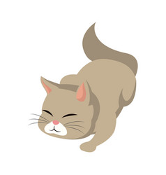 Cat animal pet adorable image vector