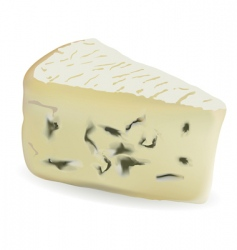 Cheese with mould vector