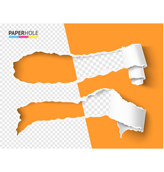 Half empty torn paper pieces scroll with vector