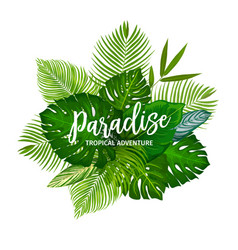 Tropical palm tree leaves and herbs vector