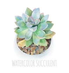 Watercolor succulent modern vector