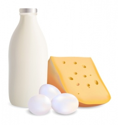 dairy products and eggs vector image vector image