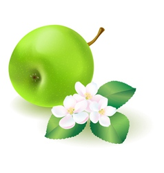Green Apple With Florets vector image vector image