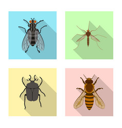 Isolated object of insect and fly logo collection vector