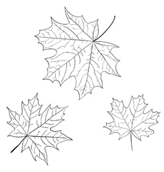 Leaf of a maple nature symbol monochrome vector image