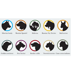 set portraits silhouettes dog breeds vector image
