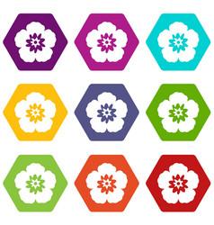 rose of sharon korean flower icon set color vector image