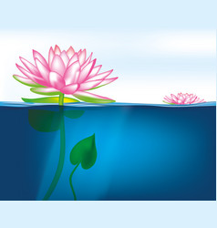 Blooming lotus on the surface of the water vector