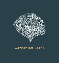 Gorgonian coral drawing of vector