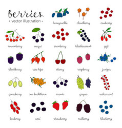 Hand drawn berries isolated on white background vector