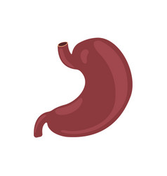 stomach icon human internal organs symbol vector image
