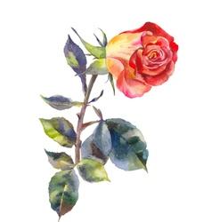 bright rose watercolor vector image vector image