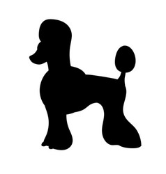 silhouette of poodle isolated on white background vector image vector image