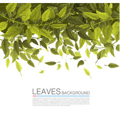 cover green leaves on a white background vector image