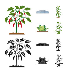 Design of greenhouse and plant icon set of vector