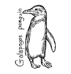 galapagos penguin vector image