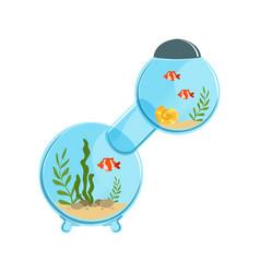 multi-room aquarium in round shape with decorative vector image