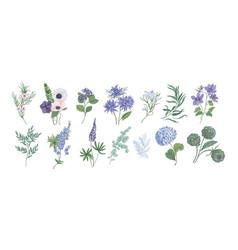 Bundle detailed drawings beautiful floristic vector