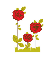 Colorful realistic red roses planted with leaves vector