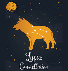 Constellation lupus star in night sky vector