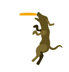 Dog playing with a frisbee icon vector