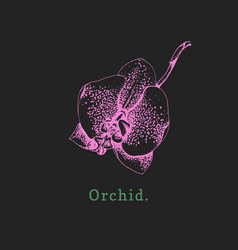 Orchid on black background vector