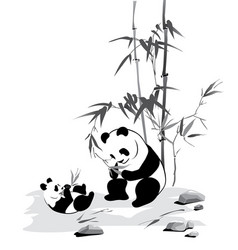 Panda and baby eat a bamboo vector