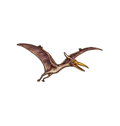 pteranodon isolated flying pterodactyl sketch vector image
