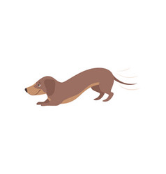 purebred playful brown dachshund dog vector image