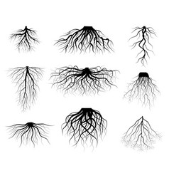 silhouette black tree roots various types shapes vector image