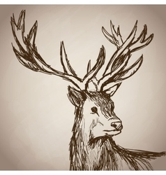 deer portrait forest hand drawing vintage vector image